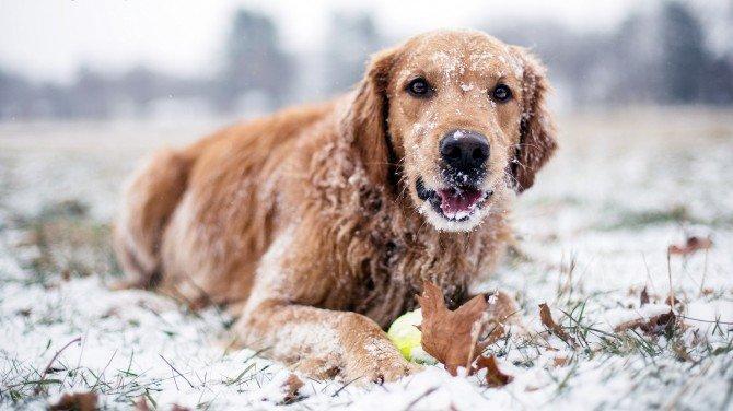 Sfaturi pentru a va proteja cainele iarna